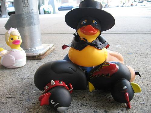 Zorro duck.jpg